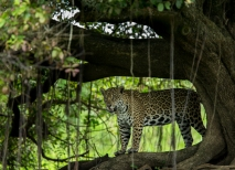 Pantanal Brasilien Thorsten Klint
