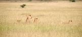 Serengeti Tanzania Marie Kantermo